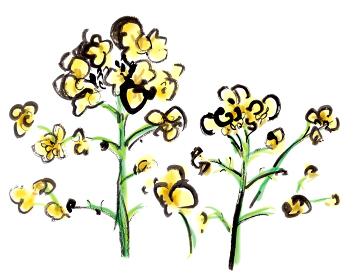 手描きイラスト素材 植物 菜の花 菜花 アブラナ