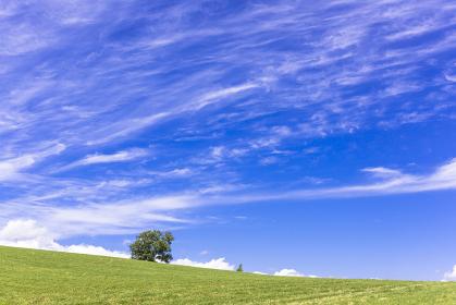北海道 丘の町・美瑛町 田園風景