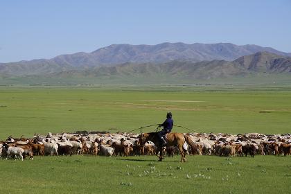 家畜の群れを追う遊牧民
