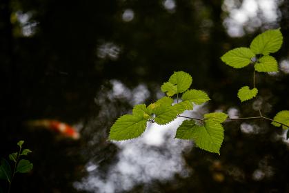 日本庭園の風景 池と草木