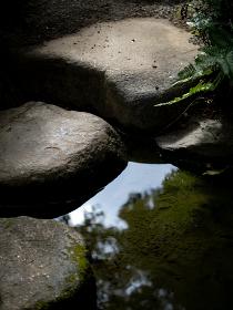 日本庭園の池と石