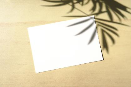 テーブルヤシの影と白いカード 3