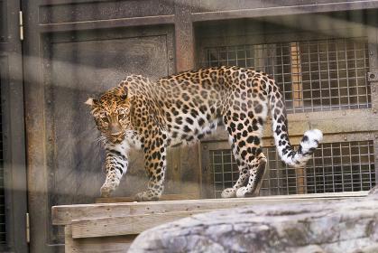 よこはま動物園ズーラシア・神奈川県、日本