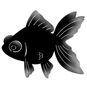 金魚 出目金 魚