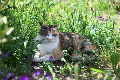 庭でくつろぐ猫(11歳)