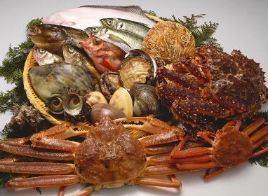 魚介類集合