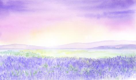 幻想的なラベンダー畑の風景