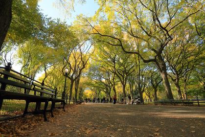 紅葉のセントラルパーク モール ニューヨーク アメリカ合衆国