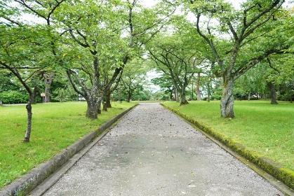 誰もいない公園の道