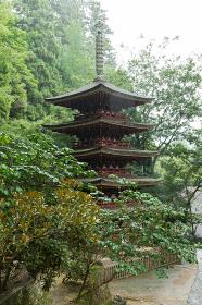 雨の室生寺 (奈良県宇陀市 2012/08/29撮影)
