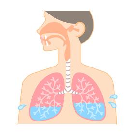 鼻・のど・肺の図表(肺水・肺気腫・肺に水がたまる)