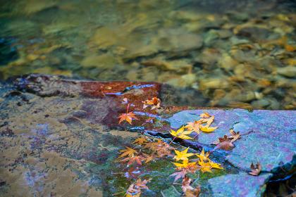 秋の渓流にを流れる紅葉【福岡県】