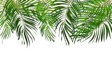 Palm Leaf Vector Background Illustration EPS10. O2017-04-09-006