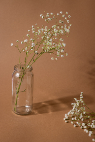 Dry flower branch on a light brown background. Trend, minimal concept with dark shadow