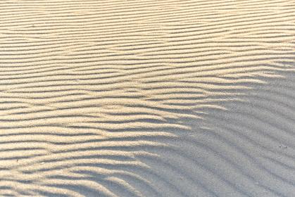 砂浜にできた風紋