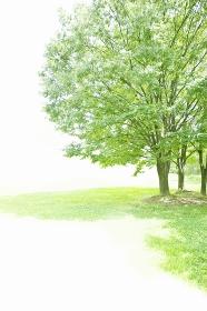 夏の日差しを浴びる草木