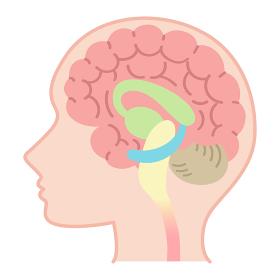脳の図表(医療・説明図・脳のしくみ・文字なし)