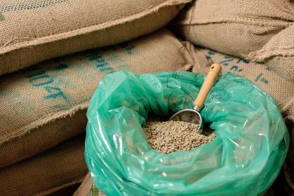 エチオピアから仕入れたコーヒーの生豆