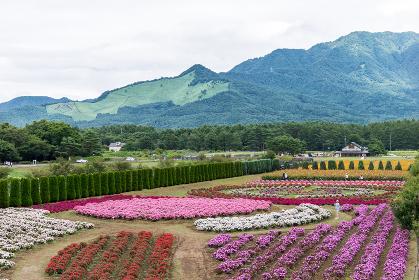 花畑と山稜(花・カラフル・自然・山)