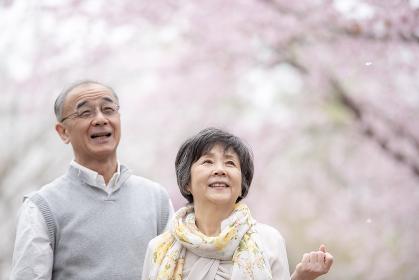 桜を見上げるシニア夫婦