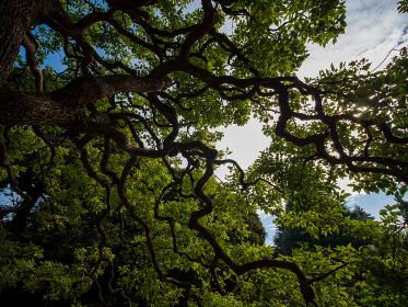 空いっぱいに枝を広げる木