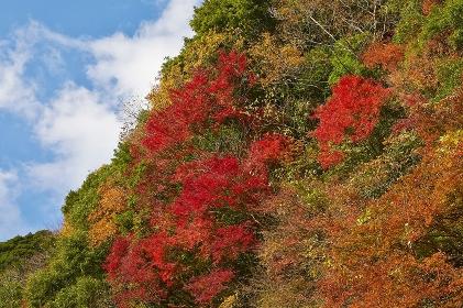 崖の細道を織りなす秋の彩り