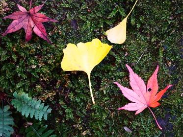 鎌倉紅葉谷の落ち葉