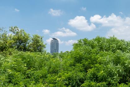 夏の埼玉県川口市の風景 荒川河川敷 8月