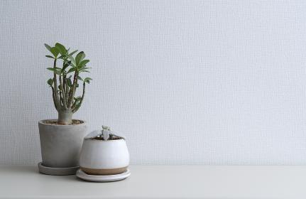 観葉植物とスペースのある白い壁