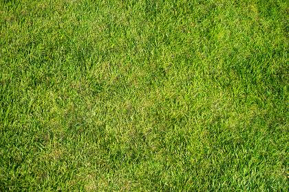 芝生の素材(背景素材・汎用・テクスチャー)