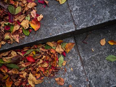 石の階段と落ち葉
