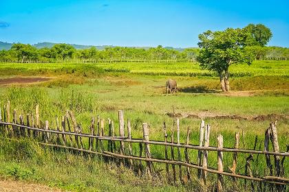 Wooden fence on the farm in Sumbava