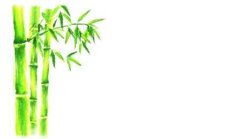 水彩で描いた竹のイラスト