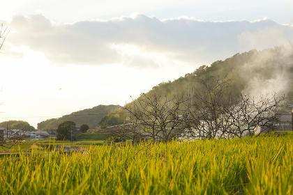 田舎 風景