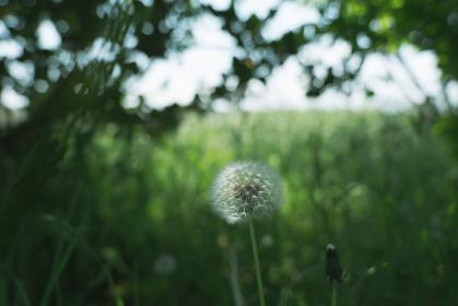 野原の木陰の綿毛