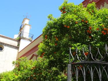スペインの定番、街路樹のオレンジの木