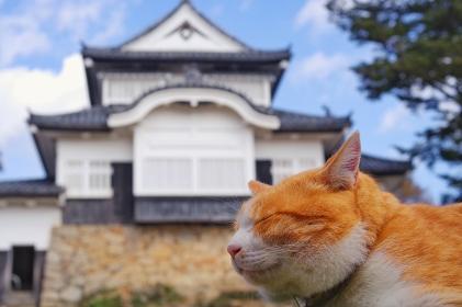 猫城主 備中松山城 さんじゅーろー