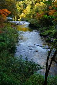 加賀温泉郷、秋の山中温泉の鶴仙渓の景色