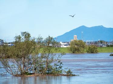 濁流で増水した利根川中流域で川に埋まった河川敷の木々と遠方の筑波山(2019年台風19号)