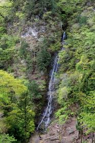 埼玉県・新緑と丸神の滝とカメラマン (展望台から)