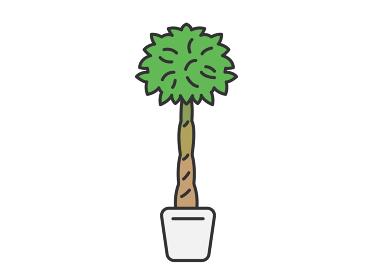 観葉植物のパキラのイラスト