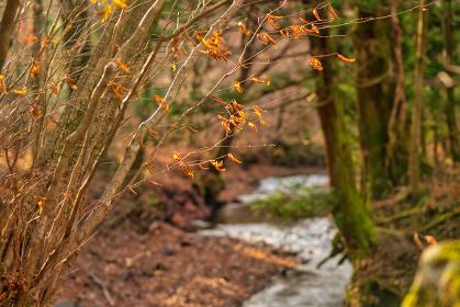 日本の名水男池湧水群と森の木々