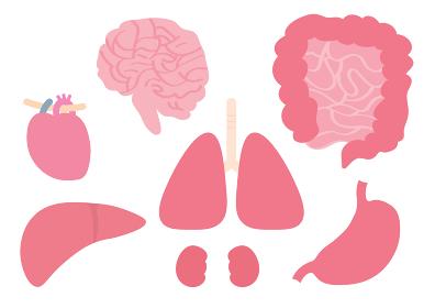 内臓 脳・心臓・肝臓・肺・腎臓・小腸・大腸・胃のイラストセット
