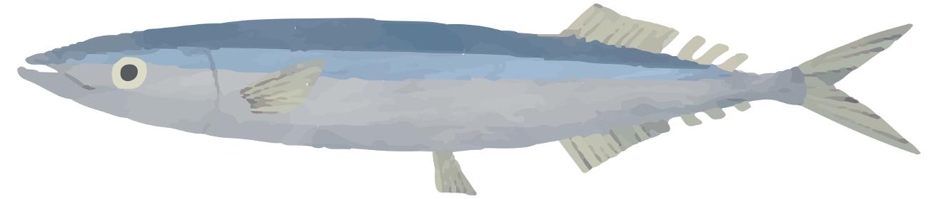 さんま 秋刀魚 魚 イラスト 水彩 素材