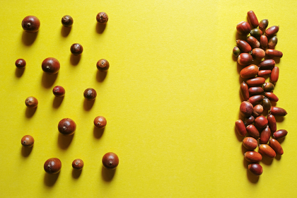 黄色い紙の上に置いたドングリのグループ。秋のイメージ。