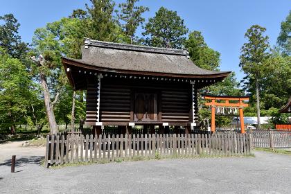 新緑の上賀茂神社 校舎 京都市