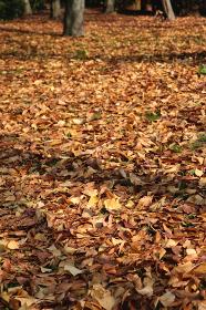 敷き詰められた落ち葉 8 縦位置