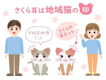 さくら耳は地域猫の印