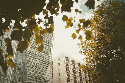 樹木の陰から見えるビル群