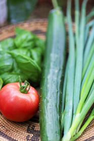 家庭菜園の夏野菜の収穫 トマト、きゅうり、長ネギ、バジル